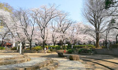 調公園 桜