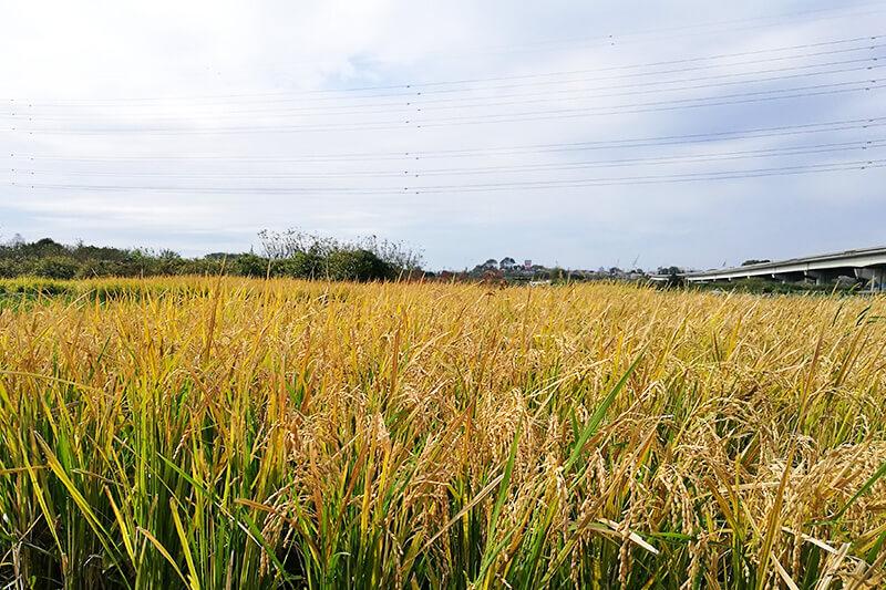 INAKA PROJECT(イナカプロジェクト) 稲刈り体験イベント