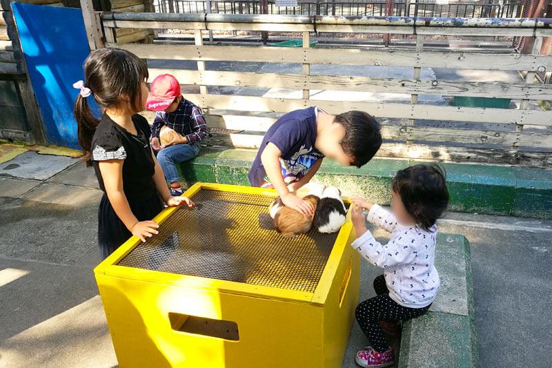 さいたま市子供動物園 モルモット