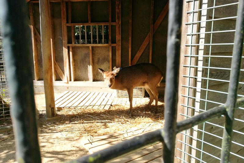 さいたま市子供動物園 鹿