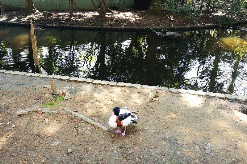 さいたま市子供動物園