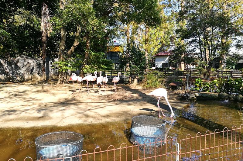 さいたま市子供動物園 フラミンゴ