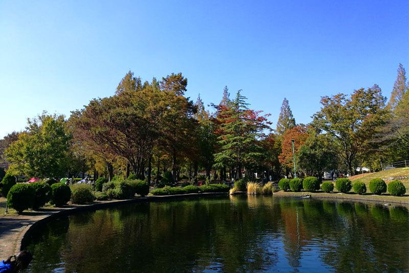 さいたま市緑区 大崎公園 池