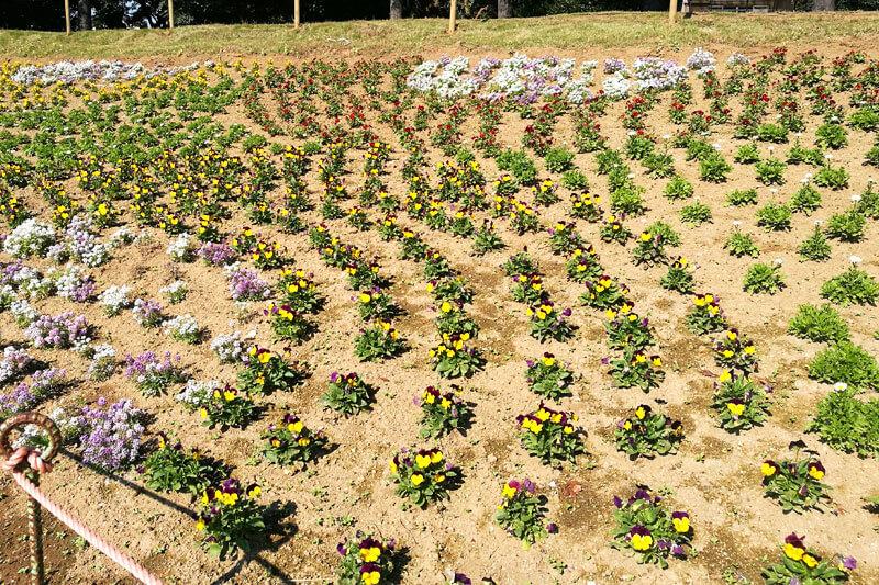 さいたま市緑区 大崎公園 花