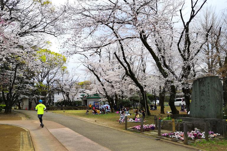 別所沼公園の桜