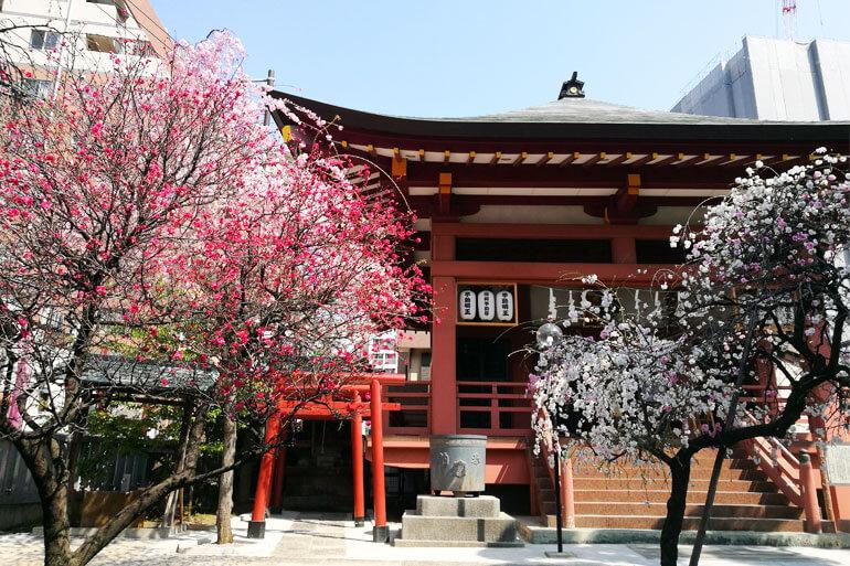 浦和不動尊 大善院 桜と源平枝垂れ桃