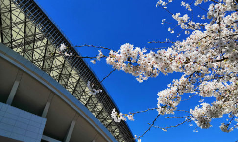 埼玉スタジアム 桜