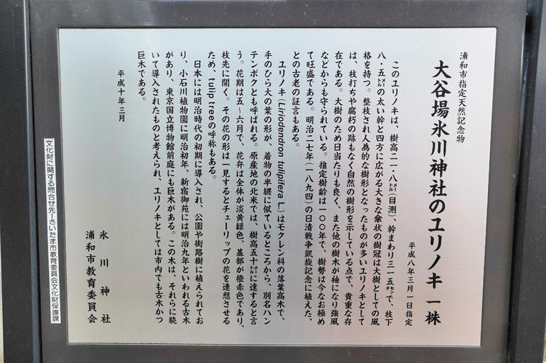大谷場氷川神社 ユリノキ