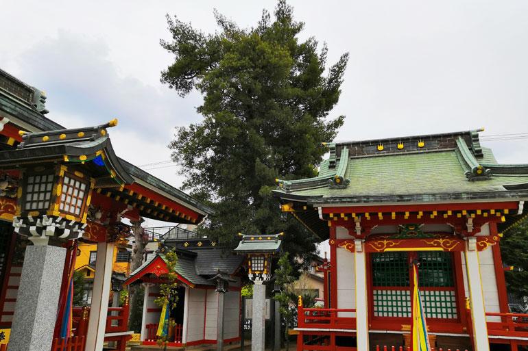 田島御嶽神社 イヌマキ