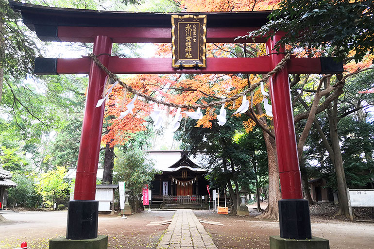 熊の御神木がパワースポット「氷川女體神社」大宮氷川神社とも関係が深い神社