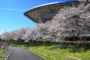 埼玉スタジアムの桜が本当に綺麗なのでご覧ください