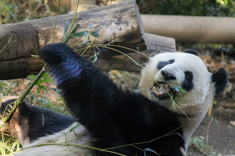 foodpanda(フードパンダ)とは