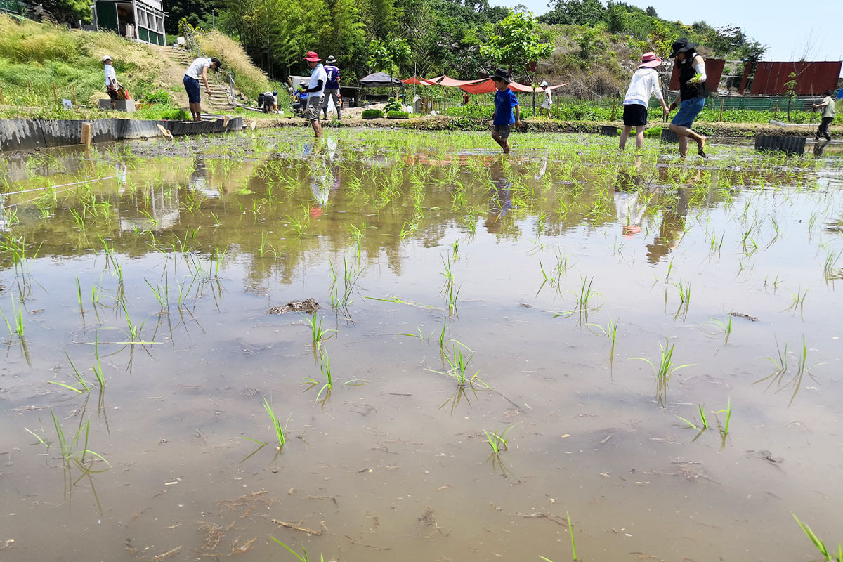 【GWイベント】見沼田んぼで生き物観察をしよう!